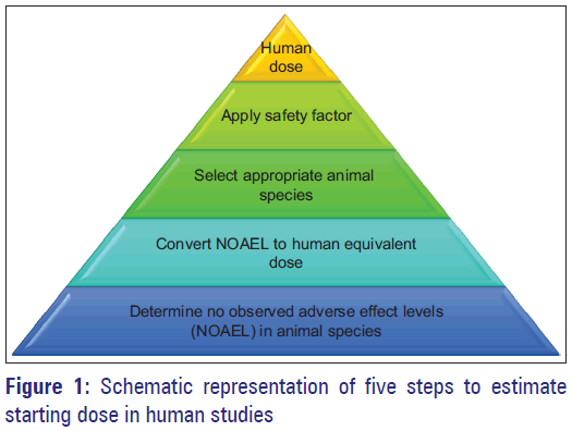 Basic-Clinical-Pharmacy-Schematic-estimate-dose
