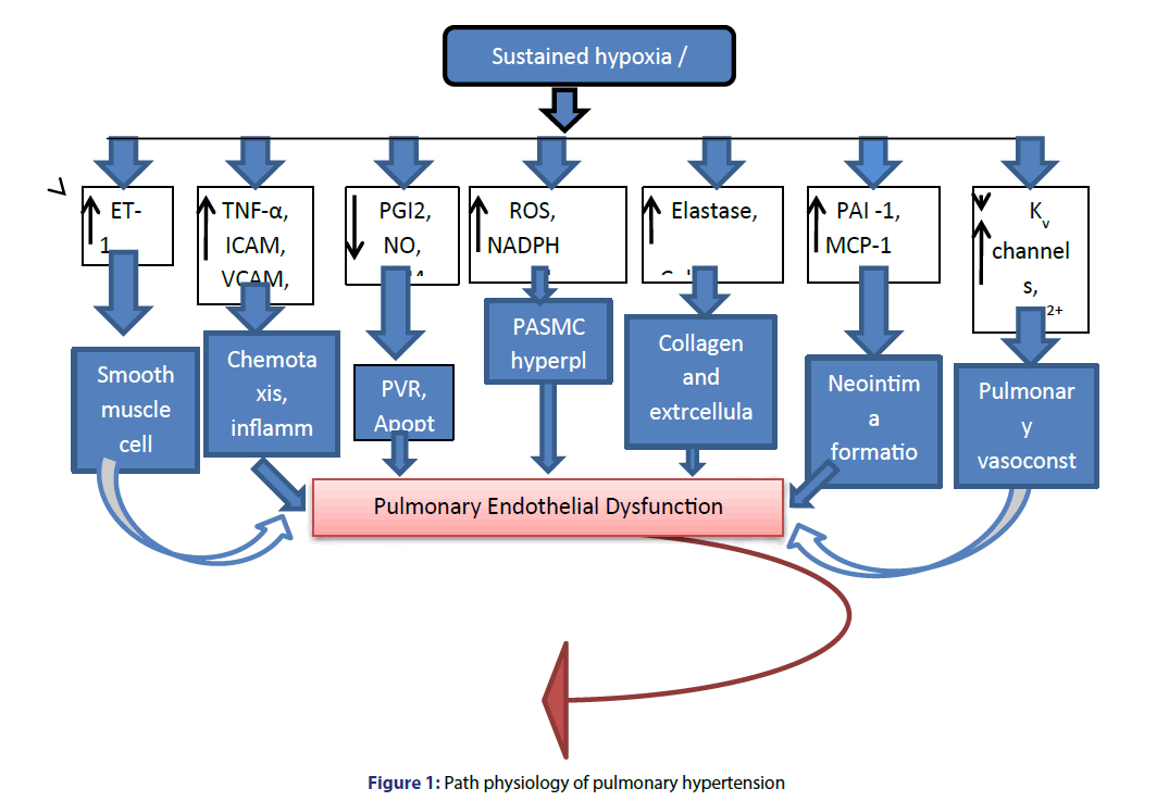 Basic-clinical-pharmacy-pulmonary-hypertension